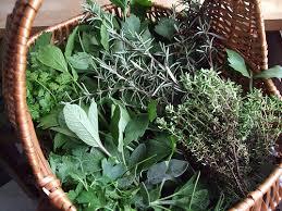 Влияние трав на пищеварение