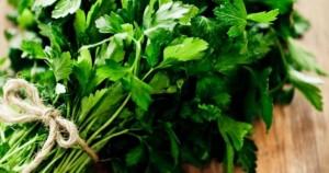 Способы приготовления средств против целлюлита с петрушкой